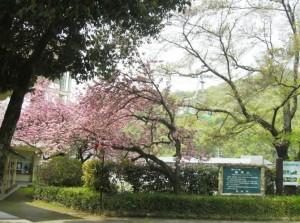 お花見遠足01